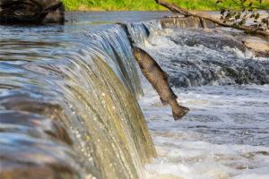 raurileromaniei-protect-beer-protejeaza-apa-1